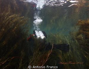 Dive into the Chidro River.