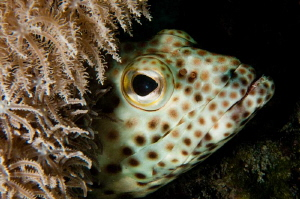 Red Sea Grouper by Paul Colley