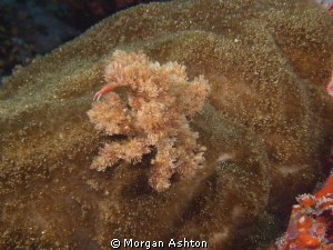 There is a crab in there somewhere. Taken with a Sea and ... by Morgan Ashton