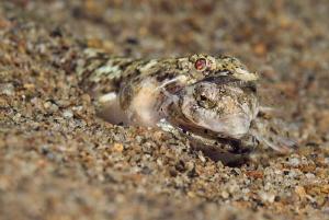 THE END  Lizardfish  Eidechsenfisch  Philippines 2010... by Jörg Menge