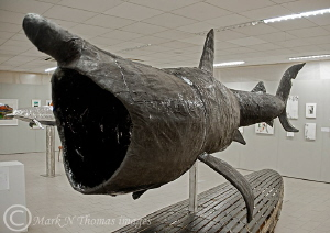 Basking shark sculpture.