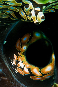 Giant Clam abstract by Paul Colley