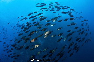 School of jacks