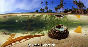 Laguna Beach shallows by Dale Kobetich