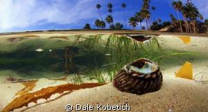 Laguna Beach shallows by Dale Kobetich