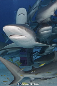 How many sharks can you fit into a single frame? by Michael Schlenk