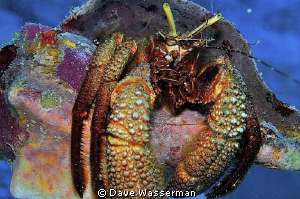 These critters have eyelashes!!!! by Dave Wasserman