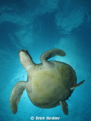 green turtle canon power shot g11 f8  1/800