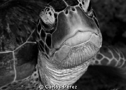 Face to face by Carlos Pérez