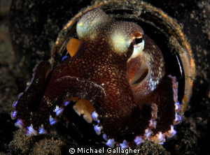 Message in a bottle, Lembeh, Indonesia... by Michael Gallagher
