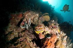 Three sisters dive site. by Mikhail Smirnov