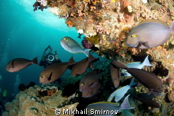 Fishes... Near Wayag isl. by Mikhail Smirnov