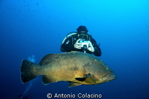 A large grouper and a photographer by Antonio Colacino