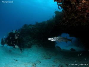 Alberto and the barracuda. by Bea & Stef Primatesta