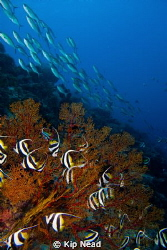 From a trip to Tubbataha last summer, the first time I ev... by Kip Nead