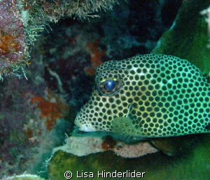 I like his polka dotted eyes! by Lisa Hinderlider