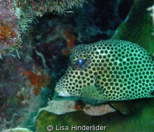 I like his polka dotted eyes! by Lisa Hinderlider