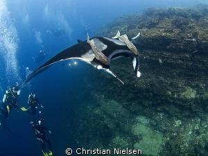 Image shot on San Benedicto Island, Socorro. Fantastic di... by Christian Nielsen