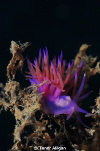 nudi in shadows by Taner Atilgan
