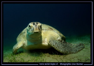 Encounter with this big Turtle in the Red Sea... :O)... by Michel Lonfat