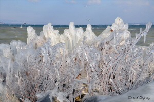 Nature art (result of a strong wind and cold temperatures) by Raoul Caprez