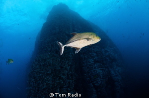 View of Roca Partida by Tom Radio