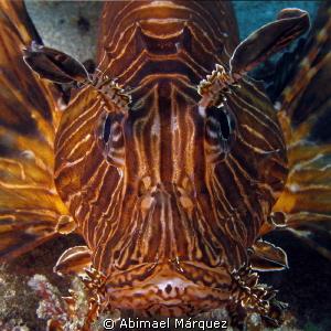 Portrait of a lion fish by Abimael Márquez