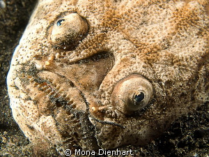 night encouner in Lembeh by Mona Dienhart