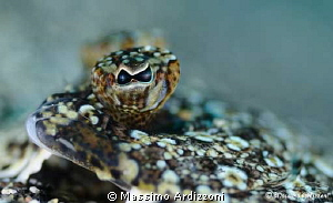 eye of sole. D300, aquatic housing- 105 micro + 2x inon z240 by Massimo Ardizzoni