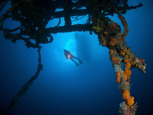 Looking from below.  At the wreck of the WIT Concrete. by Juan Torres