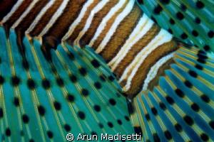Lionfish abstract by Arun Madisetti