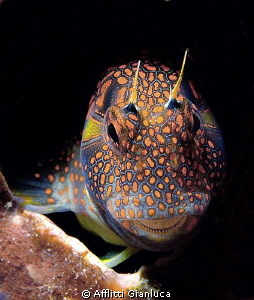 goby in lair by Afflitti Gianluca