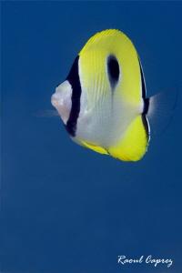 Blue & Yellow by Raoul Caprez