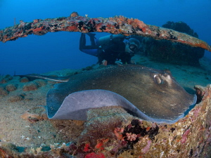 Old man and the stingray. by Juan Torres