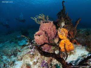 Caribbean reef. by Stéphane Primatesta