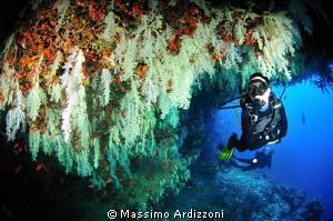fotteyo by Massimo Ardizzoni