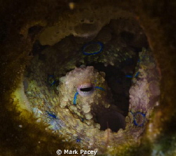 Peek a blue...