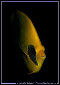 Face to face with this beautiful Butterfly Fish in the wa... by Michel Lonfat
