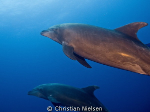 Dolphins close at Roca Partida, wrong lens, should have u... by Christian Nielsen