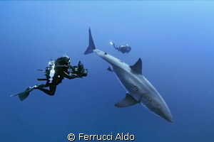 Face to face with the Great White Shark in Guadalupe Island. by Ferrucci Aldo