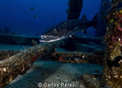 Smile!! at the Wit Concrete Wreck in ST Thomas by Carlos Pérez