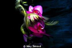 Flower by Niky Šímová
