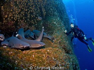 Who is watching who ? Another great encounter with numera... by Christian Nielsen