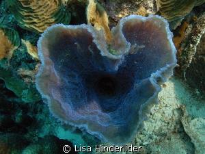 Happy Valentines Day! Purple vase sponge shaped like a he... by Lisa Hinderlider
