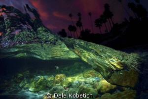 Night Dream by Dale Kobetich