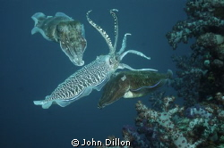 3's A Crowd