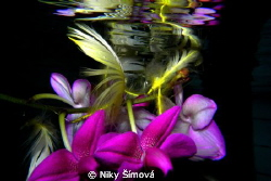 flower in the swimmingpool, orchid creations by Niky Šímová