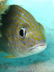 Nice fish in Bonaire by Jm Leuba