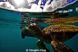 Air Breathers. An 8 year old u/w photograher hopeful has ... by Douglas Klug