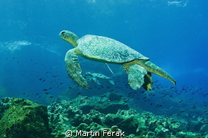 Duo turtles in Galapagos. by Martin Ferak